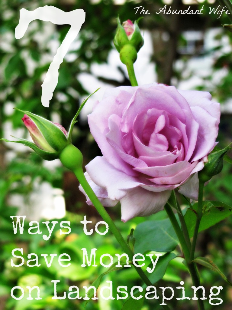7 Ways to Save Money on Landscaping
