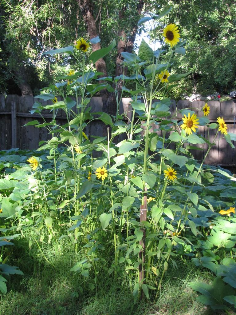 Compost Garden 2