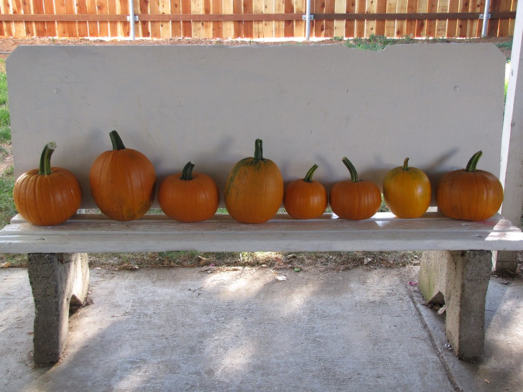 Compost Garden Harvest