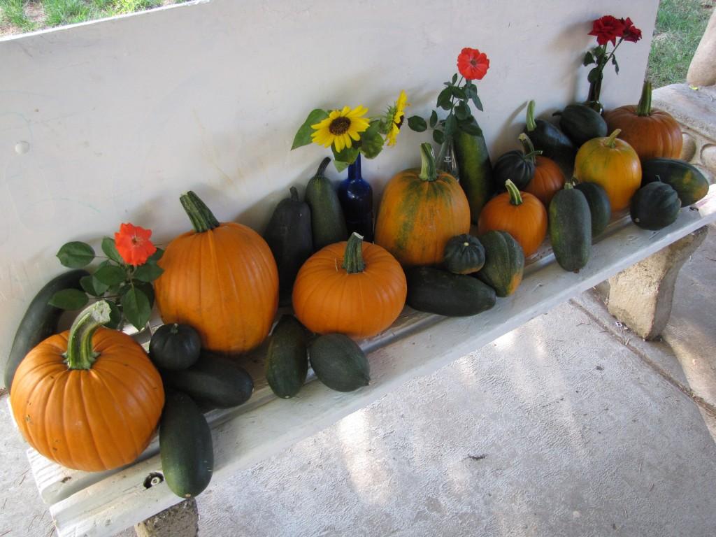 Compost Garden Harvest 2
